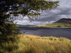 Bala lake (Tim Ravenscroft) Tags: lake bala balalake wales reeds lanscape water outdoors nature hasselblad hasselbladx1d