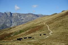 Col de Balme @ Hike to Refuge Albert 1er @ Domaine de Balme - Vallorcine @ Chamonix
