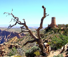 DEad Tree and Watch Tower on South Rim of Grand Canyon - Grand Canyon National Park, Northern Arizona (danjdavis) Tags: grandcanyonnationalpark nationalpark arizona tree deadtee grandcanyon desertlandcape watchtower stonebuilding oldbuilding