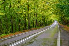 Bartın'dan Safranbolu'ya Ağaç Tüneli (Tree Tunnel on the Road From Bartın to Safranbolu) (SBastan) Tags: anatolia anadolu asia asiaminor ağaçlar beauty batıanadolu blacksea bartın ulus calmandpeace colors color doğa dağ dağmanzarası deepforest environment forest foliage gezi gorgeous green harika huzur hayat iloveturkey karadeniz kuzeybatıanadolu landscape life manzara mistikorman nature nikond610 nikon orman photography perfect plants perspective türkiyeyiseviyorum türkiye turkey travel trees tamronsp2470mmf28divcusd rain rainy serhatbaştan sbastan splendid yeşil yağmur wideangle westanatolia westnorthanatolia tree road treetunnel ağaçtüneli