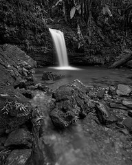 Relief (Eddie La Mole) Tags: elyunquenationalforest rainforest waterfall cascade creek trees blackandwhite monochrome nature ilforddelta100 canonelan7ne ef1740l