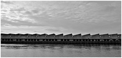 Eerste Haven Scheveningen (LeonardoDaQuirm) Tags: netherlands nederland scheveningen vis visafslag fish noordzee nordsee northsea volvooceanrace