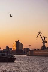 Das Tor zur Welt (AxelN) Tags: daybreak hamburg deutschland water morgen dawn elbe wasser germany sky elbphilharmonie möwe seagull morgengrauen himmel