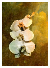 Orchids in Soft Glow (kinglear55) Tags: flower orchids texture film olympusom10 adobe elements microsoftdigitalimagesuite art photography