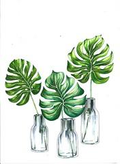 monstera (michailovaster) Tags: plant white green tropical tropic botanicalillustration botanico illustration ilustração монстера ботаника арт постер иллюстрация маркеры копик рисунок цветной copic handdrawing draw drawing