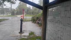 Lombard, Prairie Path (sfrikken) Tags: illinois dupage county bicycle rain prairie path bike lombard