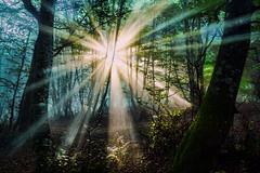 TRANSPARENTE 3 (juan luis olaeta) Tags: forest fog tree photoshop paisajes landscape nieblas laiñoa ligthroom rayos pagoa bosque basoa nature naturaleza hayedo raw canon sigma1020 canoneos60d basquecountry euskalherria