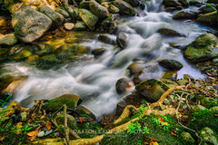 Flow motion, 2019.08.20 (Aaron Glenn Campbell) Tags: flow motion 3xp ±2ev hdr greenbrier greenbriercove middlepronglittlepigeonriver seviercounty tennessee nps gsmnp smokymountains nationalpark outdoors optoutside nature moss rocks lichen water stream creek motionblur nikcollection analogefexpro colorefexpro viveza skylum macphun aurorahdr sony a6000 ilce6000 mirrorless rokinon 12mmf2 wideangle primelens manualfocus emount