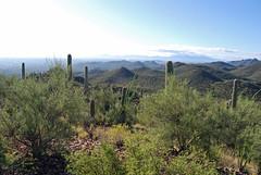 View from Mine Mountain (Karolina W) Tags: arizona desert tucson hike sonorandesert morninghike tucsonmountainpark starrpasstrailhead saguaro saguaros