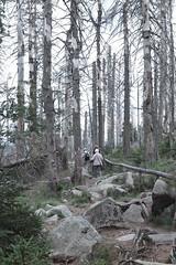 Ach, wie ist es im Harz so schön ... (its.my.turn) Tags: nationalparkharz achtermannshöhe waldsterben klimawandel