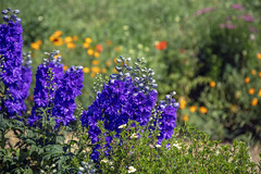 Flowers at Angel Fire RV Resort 15 (Largeguy1) Tags: approved flowers macro canon 5dsr