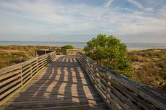 SPFL-8211-0296 (pcopros) Tags: fl firstlanding beach boardwalk stateparks chesapeakebay