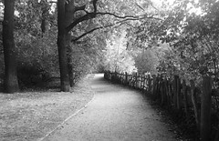 a walk in the park (Renate R) Tags: volksparkfriedrichshain berlin park path weg blackwhite schwarzweiss zaun pfad