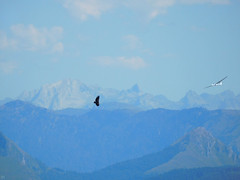 dancing with stranger Pyreneas (matthias416) Tags: blue sky fly mountain pyrenees blau himmel pyrenäen frankreich berge paysbasque baskenland geier segelflugzeug fliegen vulture glider