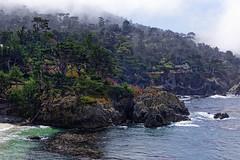Monterey Bay, California | ACT8700 (TariqhCN) Tags: cypress trees california bay pacific ocean beach succulent fog nikon d810 nature outdorrs sky hills coast rocks