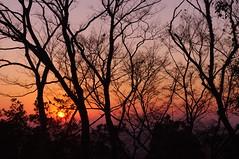 Sunrise, Tokyo, Japan (runslikethewind83) Tags: sunrise sun trees nature japan tokyo light 日の出 日 自然