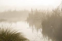 Wetlands on a foggy morning (njohn209) Tags: birds d500 nikon nz