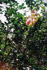 (Kkeina) Tags: film analog manual 35mm 50mm olympus om1 japan nara nature green