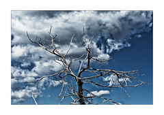 cloud-tree-skeleton (Armin Fuchs) Tags: arminfuchs nomansland clouds tree sky blue niftyfifty anonymousvisitor thomaslistl wolfiwolf jazzinbaggies wood