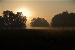 Foggy sunrise (Krystian38) Tags: forest trees tree sun sunlight sunrise pentax k50 poland polska fog mist misty morning autumn september gold landscape landscapes nature outside outdoor