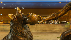 Kutyas lany (Behind Budapest) Tags: 2019 365project 70d belvaros budapest canon hungary kutyaslanyszobor magyarorszag art city dog kutya longexposure night outdoor outside statue szobor town urban