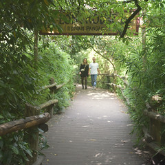 Framed in Green (myphotomailbox) Tags: rotterdam netherlands blijdorp zoo green smileonsaturday framed natuur groen park dierentuin rumahpanjang langhuis