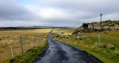 l'Aubrac profond (b.four) Tags: road strada route pré meadow prato croix croce nasbinals aubrac lozère cross coth5
