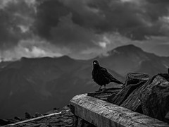Dark Bird Is Home (freundsport) Tags: black crow bird mountains austria cloudscape sky tamron sony7m3 bw animal mood stone wood monochrome nature raven