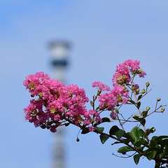 Skytree tower (Abhay Parvate) Tags: bokeh macro nature city cityscape flowers colorful skytree