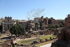 Foro Romano e Palatino_29