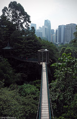 Canopy Walk (peterphotographic) Tags: p8020915edwm klforestecopark olympus em5mk2 microfourthirds mft ©peterhall canopywalk kl kualalumpur malaysia seasia asia forest wood tree rainforest walk walkway canopy bridge high heights city cityscape urban nature