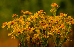 Flowers (ost_jean) Tags: flowers bloemen fleurs ostjean nikon d5200 tamron sp 90mm f28 di v