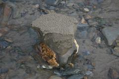 Photo of Nolton Haven sand pillar