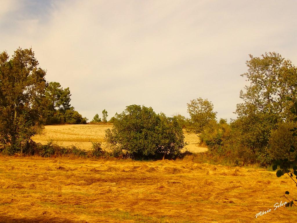 Águas Frias (Chaves) - ... os campos de centeio. já segado ...