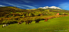 Early Morning - Basalt CO Horse Ranch (HarrySchue) Tags: ranch horses mountains nature landscape colorado hiking rockymountains soprismountain sunrise trees snow clouds spring nikon reallyrightstuff snowcappedpeaks fotodiox d800e