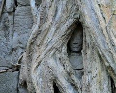 Hidden Face (Anne Marie Clarke) Tags: taprohm temple monastery cambodia siemreap buddhist face hidden tree mysterious