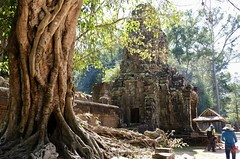 The Trees of Ta Prohm (Anne Marie Clarke) Tags: cambodia siemreap angkor taprohm jungle trees monastery temple buddhist