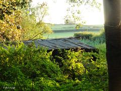 Boathouse (mark.griffin52) Tags: trees england dorset sturminsternewton riverstour derelict countryside sunshine sunlight overgrown corrugatediron woodenbuilding landscape riverside boathouse woodland