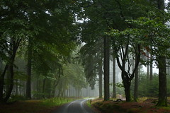 Walkway (wellandok) Tags: foggy forest feldberg taunus woods