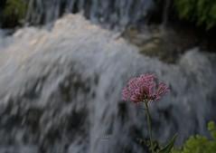 Al borde de la cascada (Rabadán Fotho) Tags: