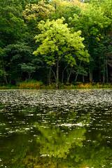 Shiretoko Gokolake (Role Bigler) Tags: fujifilmxt2 hokkaido japan landschaft natur nippon see fujinon1855ois gokolake lake landscape nature shiretoko shiretokonationalpark wasser wasserlillien water sharibezirk hokkaidō