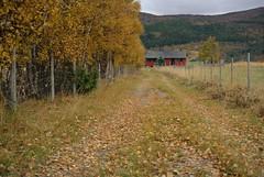 løvet faller (KvikneFoto) Tags: nikon1j2 landskap høst autumn fall