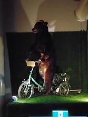 Frank (Quevillon) Tags: estrie cantonsdelest easterntownships jacquescartier sherbrooke siboirejacquescartier microbrasseriesiboire brewpub ratebeer americanblackbear bear