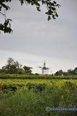 Weinviertel Niederösterreich Retz_DSC0466 (reinhard_srb) Tags: weinviertel niederösterreich retz weinberge weingarten weinbau windmühle rebstock wahrzeichen