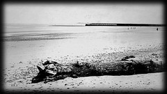 white morning vanagart 2019 jpg (vanagART) Tags: whitemorning blackandwhite monochromephotography seaside scotland people vision environment prints printsforsale wallart wallartforsale oldtree lowtide travel morning walk seafront