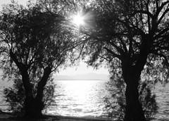 Αυτό το φως (Argyro Poursanidou) Tags: tree sun sunlight sea nature light love hope αγάπη ελπίδα φωσ ζωή smileonsaturday framed