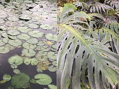 Guatemala_Marina_plantas (Marina Muniz Mendes) Tags: planta plants guatemala antigua naturaleza nature natureza verde green celular mobile