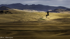 Harvest Time in the Palouse (bern.harrison) Tags: palouse washington unitedstatesofamerica wheat harvest agriculture mountains vista rural