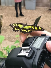 Perfect Moment! (shane kerry) Tags: shanekerry shane kerry bristol butterfly canon600d canon 6d macro photography