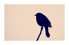 Blackbird in Profile (imageClear) Tags: graphic bird animal blackbird redwingedblackbird framed picmonkeycom aperture nikon d500 80400mm imageclear flickr photostream nature
